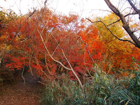 萩尾公園 (15)
