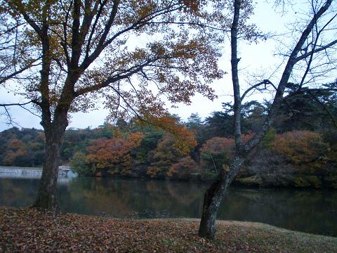 萩尾公園 (26)