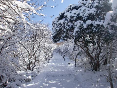 沓掛山 (13)