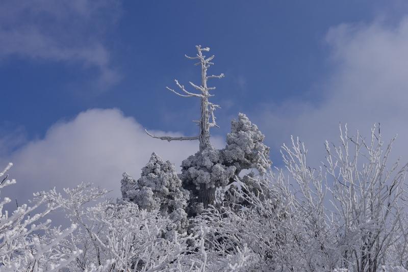 英彦山 (44)