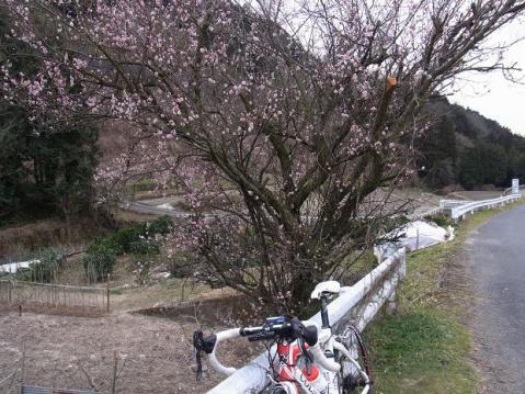 20110223なごり雪1159