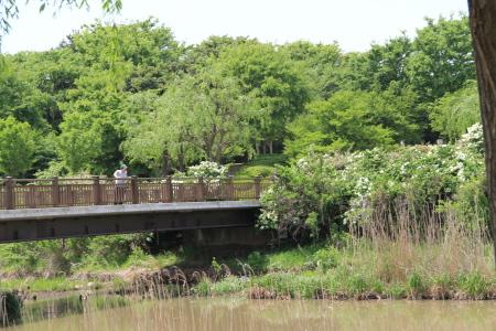 鳥屋野潟公園1