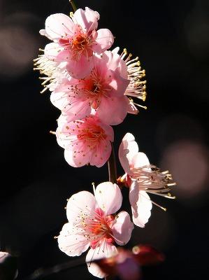 2013年2月10日 小石川植物園 皇居東御苑 6
