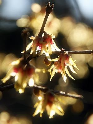 2013年2月10日 小石川植物園 皇居東御苑 7