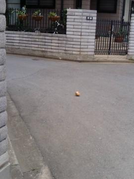玉ねぎの謎