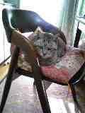 椅子を占拠するネコ