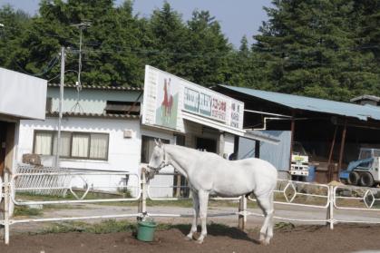 ちょっとけだるい白いお馬さん