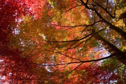 西山荘 紅葉1