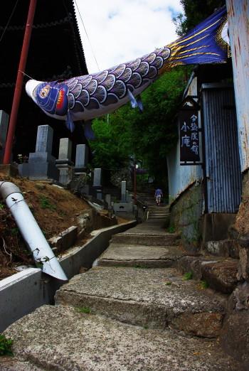 尾道坂道鯉幟