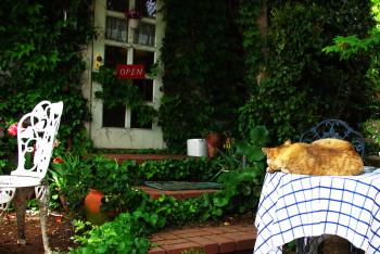 尾道坂道カフェの猫