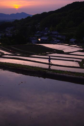 棚田の夕日 畦を行く人