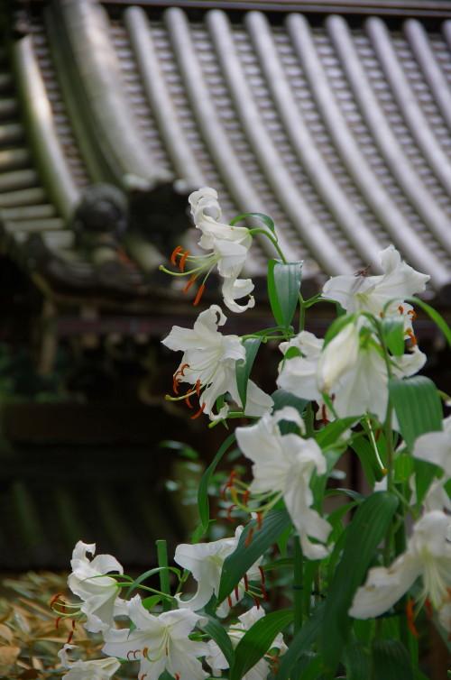 松尾寺 カサブランカ