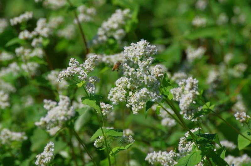 笠 そばの花