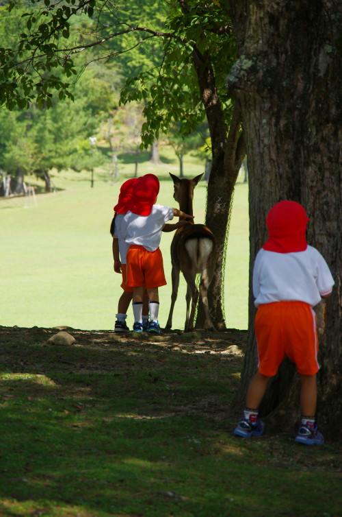 奈良公園 園児と鹿3