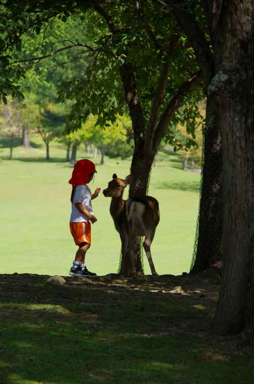 奈良公園 園児と鹿1