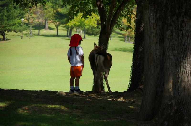 奈良公園 園児と鹿