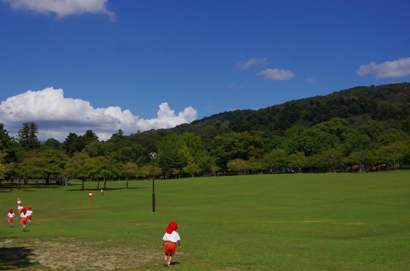 奈良公園 園児