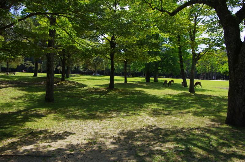 奈良公園 木陰