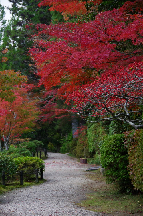 円成寺 池の畔