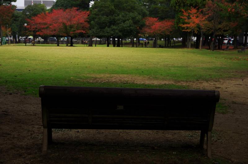 奈良公園 さくらもみじの見えるベンチ