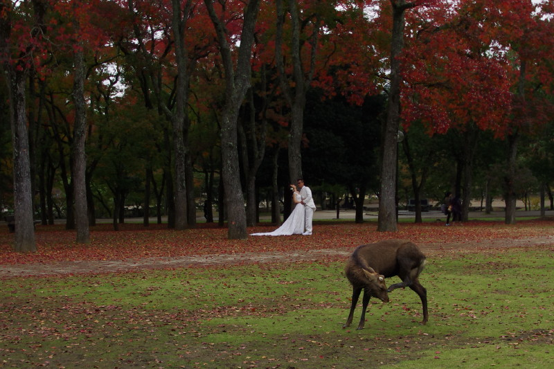 奈良公園 鹿関せず