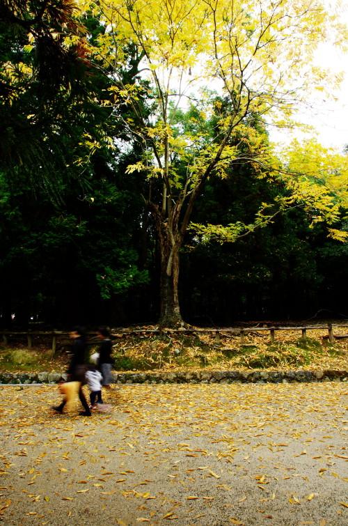 奈良公園 ムクロジ落葉