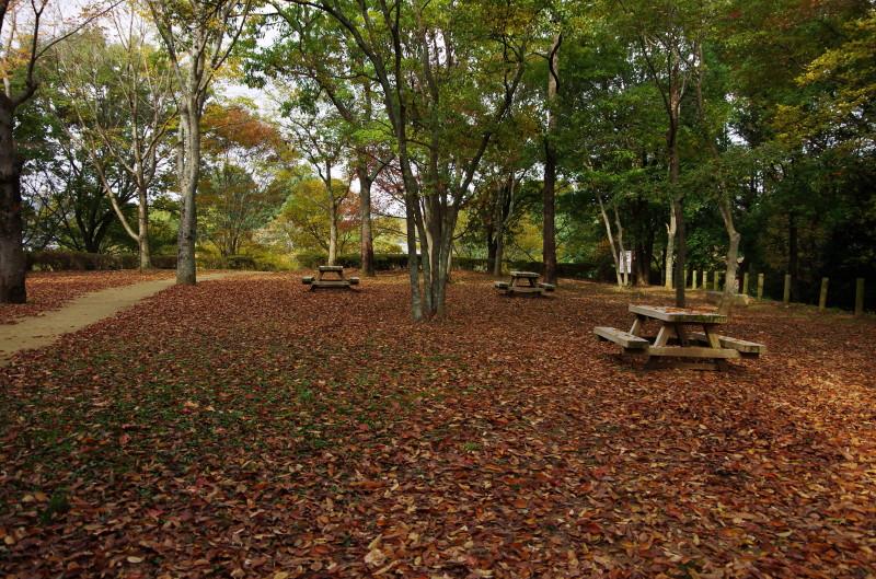 高松塚公園  落ち葉