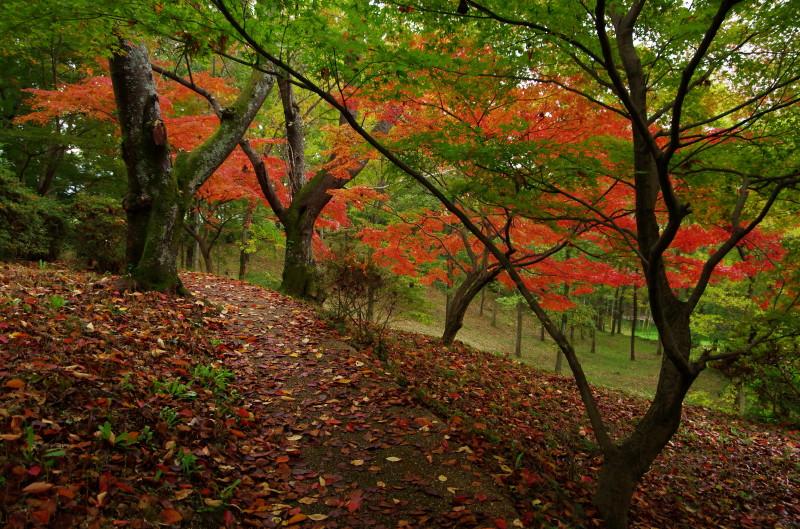 高松塚公園  紅葉