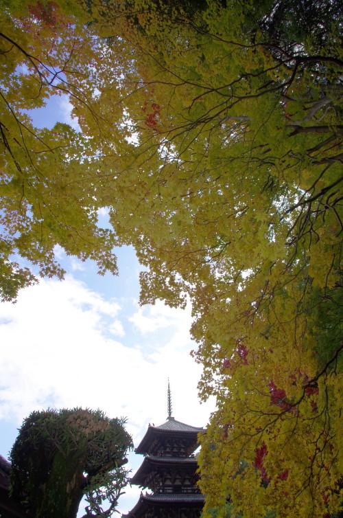 西南院 黄葉もみじと塔
