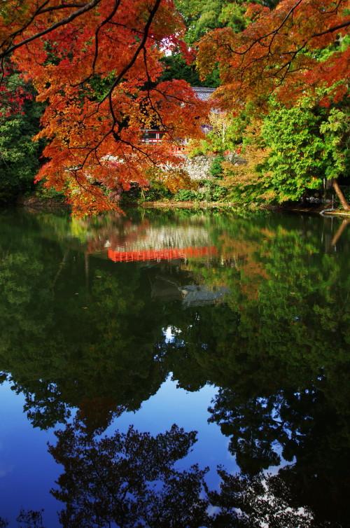 高鴨神社 池に映る拝殿