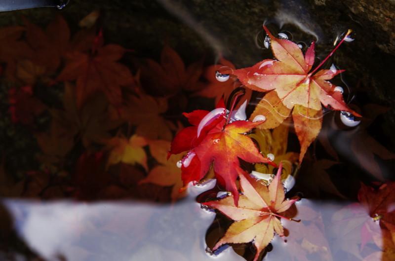 高鴨神社 浮いた落ち葉