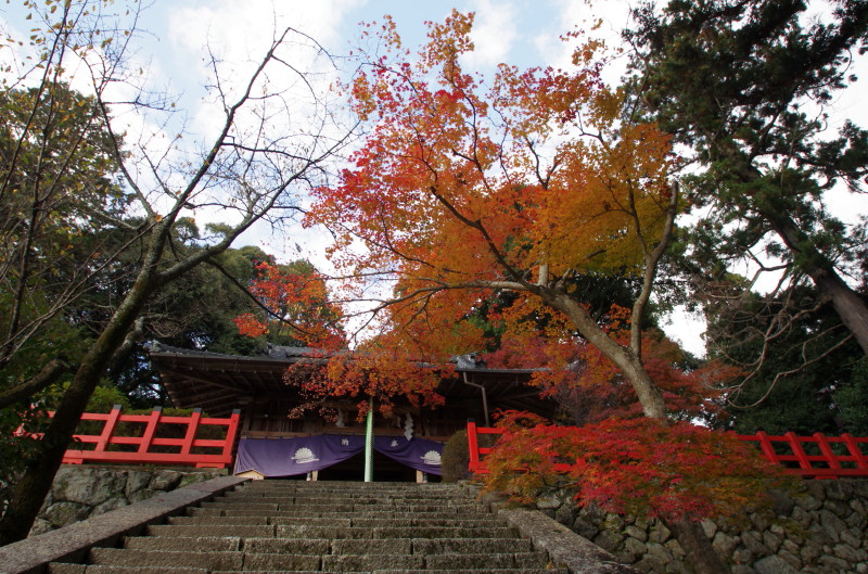 高鴨神社 拝殿と紅葉