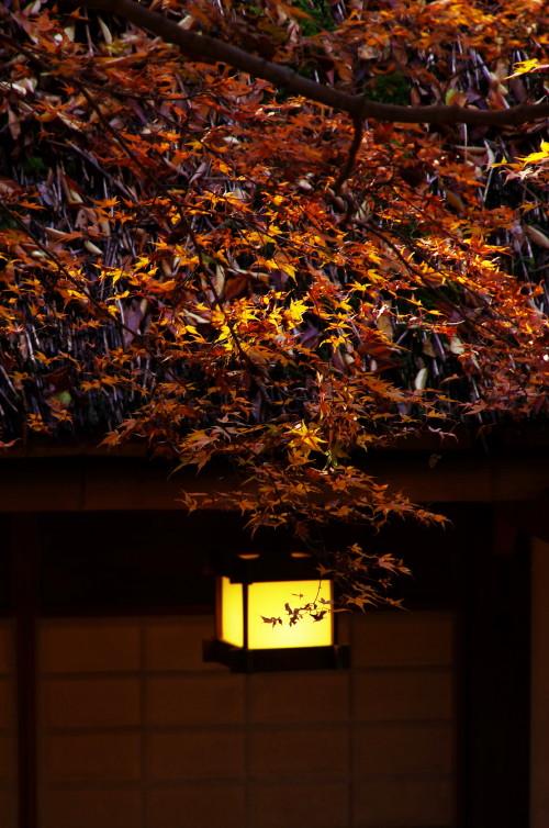 水谷橋 茶屋の明かり