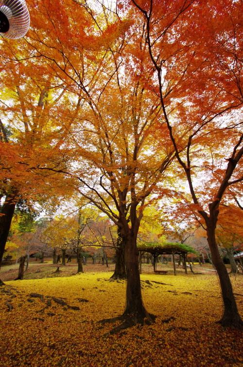 落ち葉のグラデ