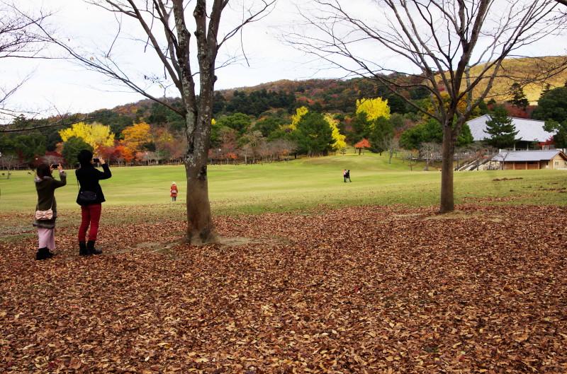 奈良公園 浮雲園地