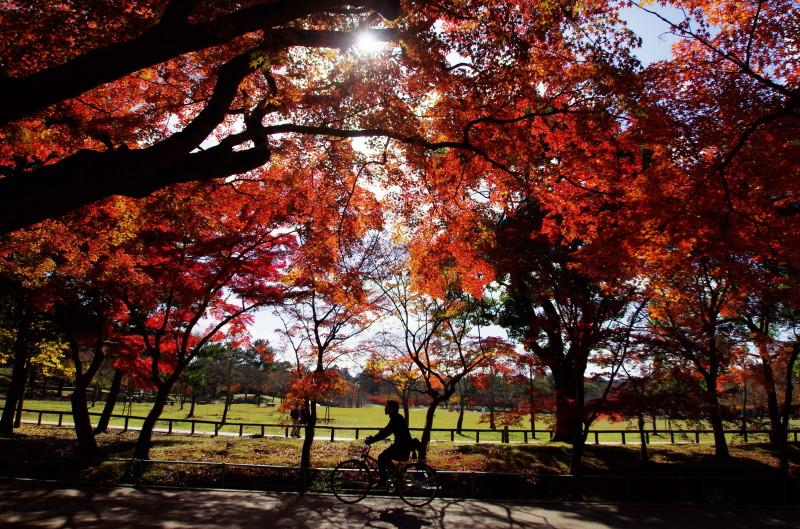 奈良公園 吉城川 自転車