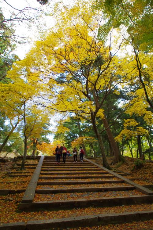 奈良公園 手向山参道