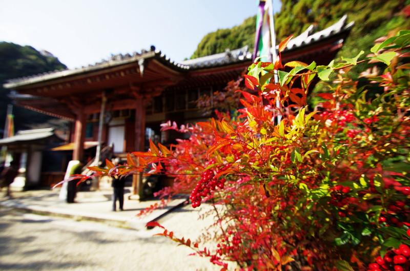 松尾寺 南天と本堂