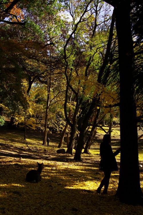 奈良公園 鹿と女性のシルエット