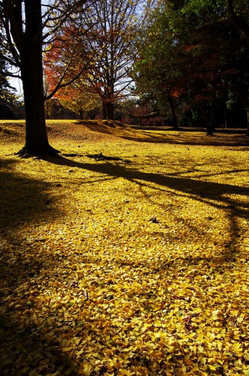 奈良公園 銀杏カーペット