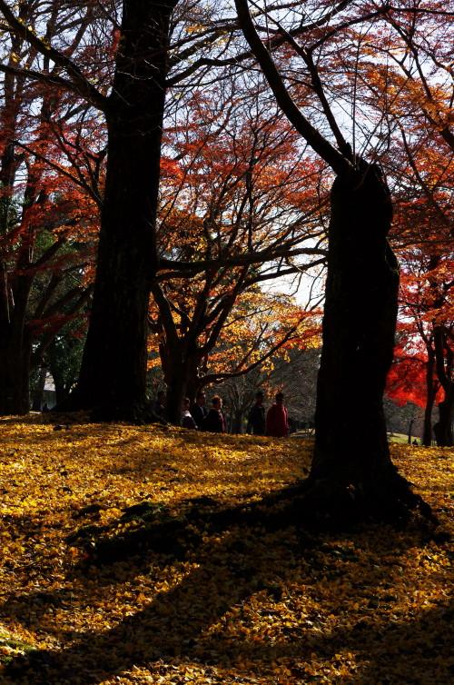 奈良公園 幹