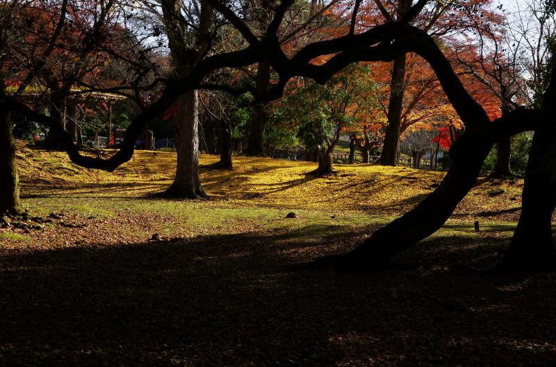 奈良公園 くねくね幹のシルエット