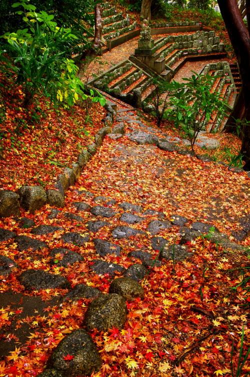 九品寺 散り紅葉