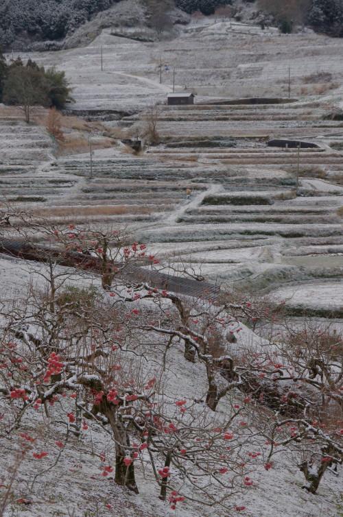 稲淵 柿と棚田雪景色