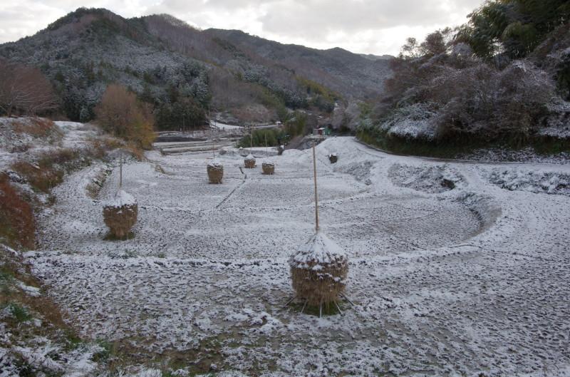 稲淵 ススキ雪景色