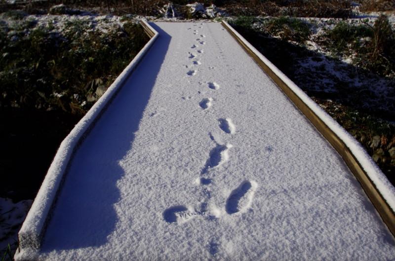足跡の特権