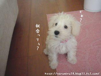 20101011a_20101013000107.jpg
