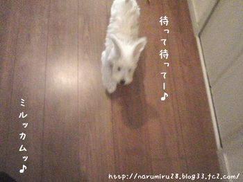 20101016a.jpg