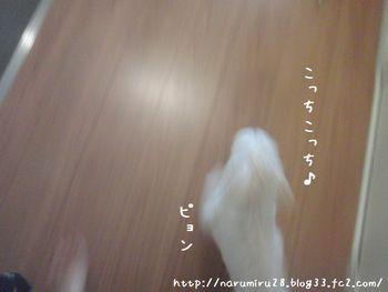 20101016b.jpg