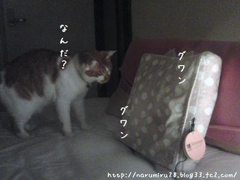 20101016e.jpg